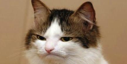 unimpressed-cat