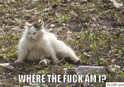 pic-drunk-lol-cat